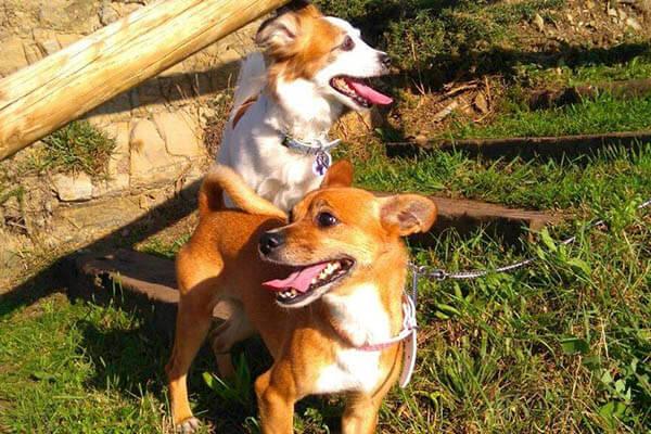 Cuanto viven los perros segun raza tama o y caracter sticas - Imagenes de animales apareandose ...