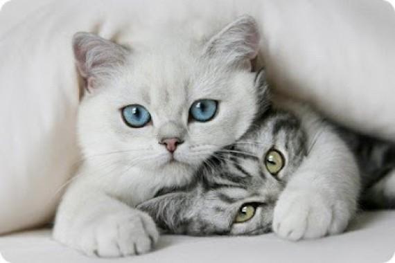 preguntas sobre gatos