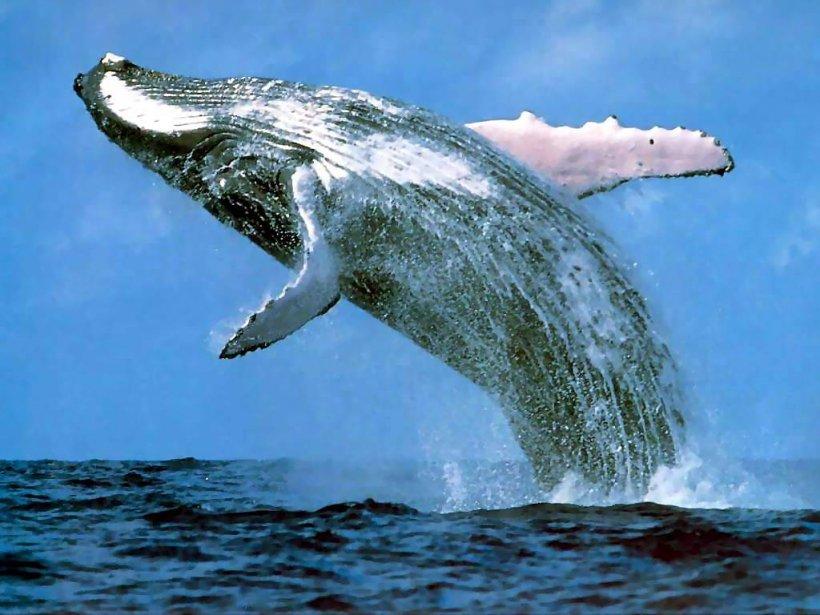 Fin a la caza de ballenas gracias a jóven Paraguaya