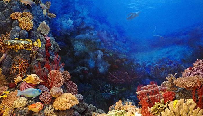 Los corales y su esperanza de vida