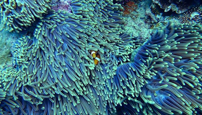 Los corales y su ciclo de vida