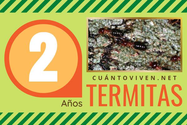 Cuánto viven las termitas